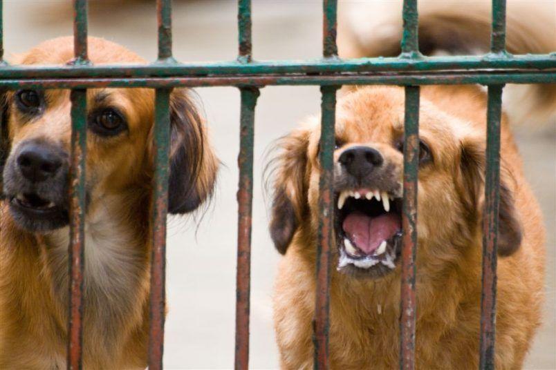 perro furioso