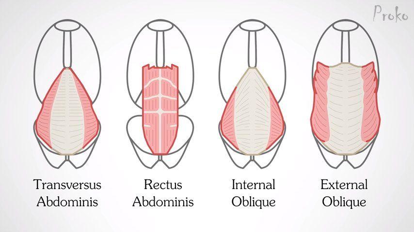 dibujo abdominales
