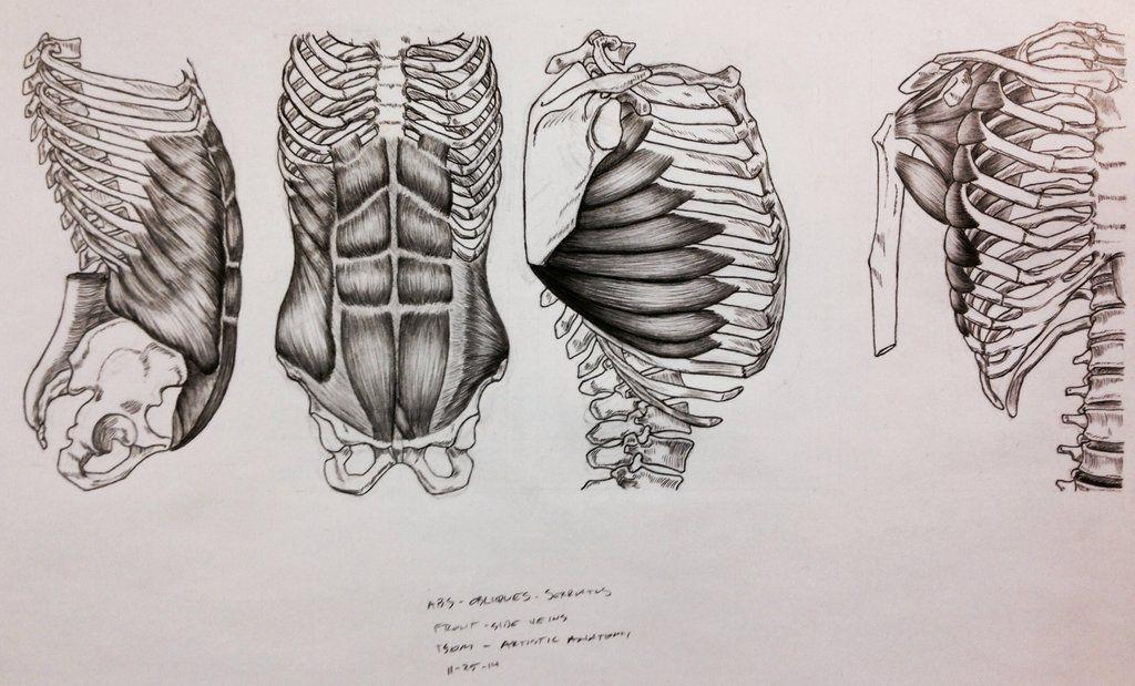 abdominales oblicuos dibujo
